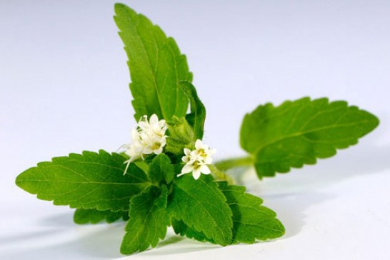لاغری با گیاه استویا – لاغری و تناسب اندام ۱۰۰% طبیعی با استویا