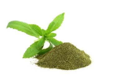 دقیق تر درباره استویا بدانید – جزئیات گیاه استویا