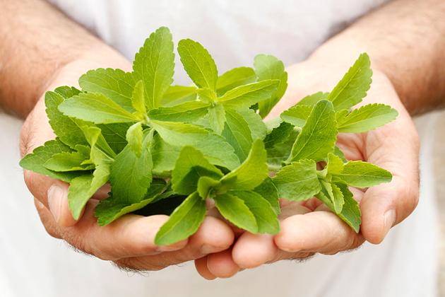 مواردی که درباره گیاه استویا نمی دانید